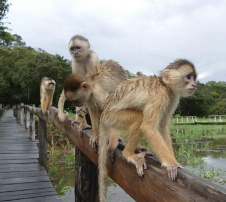 Comunicación: el último mono